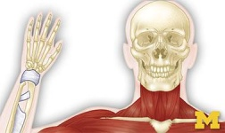 Davenport University-Kalamazoo Location Online Courses Anatomy: Musculoskeletal and Integumentary Systems for Davenport University-Kalamazoo Location Students in Kalamazoo, MI