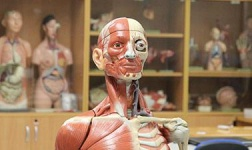 UC Santa Cruz Online Courses Human Anatomy for UC Santa Cruz Students in Santa Cruz, CA