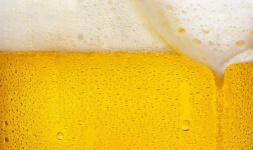 NYU Online Courses The Science of Beer for New York University Students in New York, NY