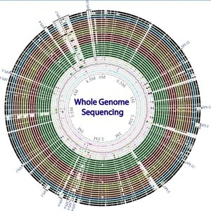 Ohio State Online Courses Whole genome sequencing of bacterial genomes - tools and applications for Ohio State University Students in Columbus, OH