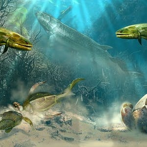 UCLA Online Courses Paleontology: Early Vertebrate Evolution for UCLA Students in Los Angeles, CA