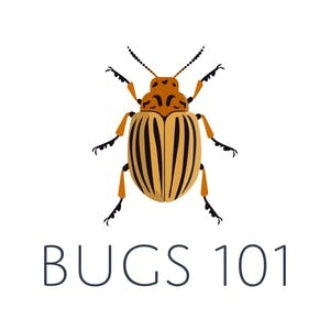 Stanford Online Courses Bugs 101: Insect-Human Interactions for Stanford University Students in Stanford, CA